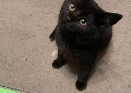 Emmie- Kitten