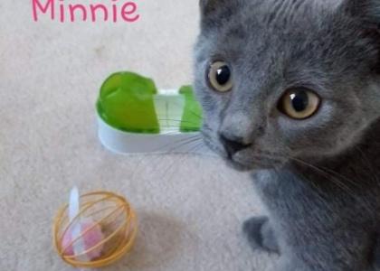 Minnie-Kitten