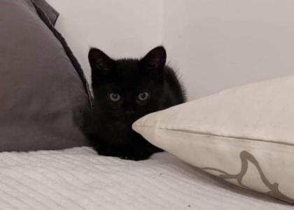 Sally-Kitten