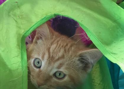 Breezy-Kitten
