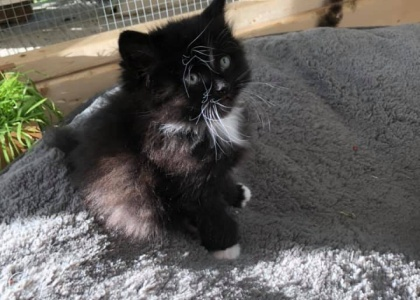 Saturn-Kitten