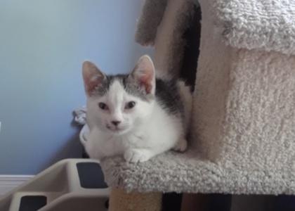 Estelle- Kitten
