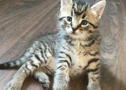 Willie-Kitten