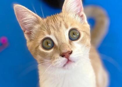 Annie-Kitten