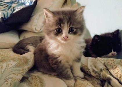Wrangler-Kitten