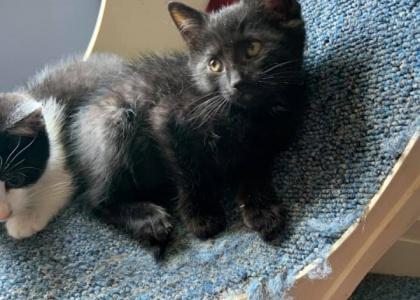 Equinox- Kitten