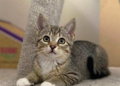 Piper-Kitten