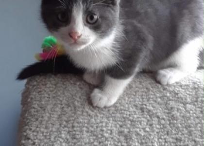 Argo-Kitten