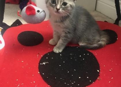 Gracie-Pending Adoption