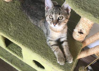 Arya-Kitten