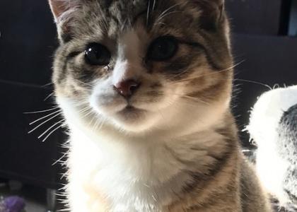 Harley-Kitten
