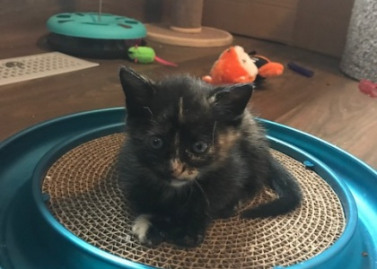 Luna-Pending Adoption