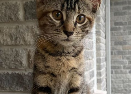 Morgan- Kitten