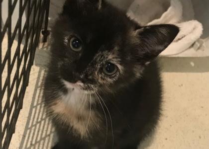 Jemima-Kitten