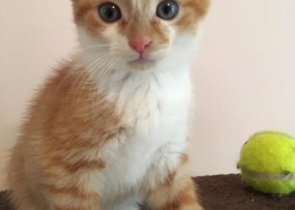 Tipper-Kitten