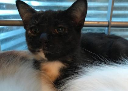 Dottie-Kitten