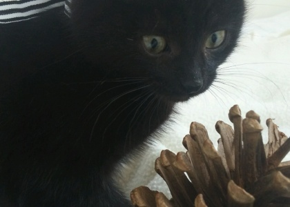 Jenny-Kitten