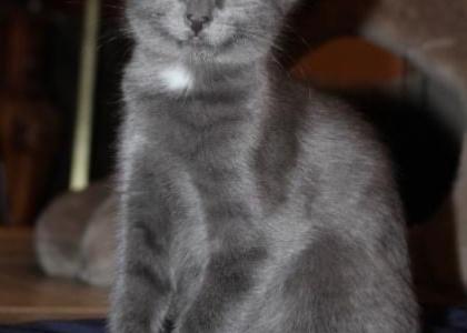 Coco Bean- Kitten