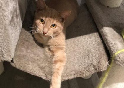 Otis-Kitten