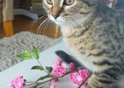 Malcolm-Kitten