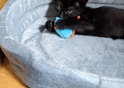 Harry-Kitten