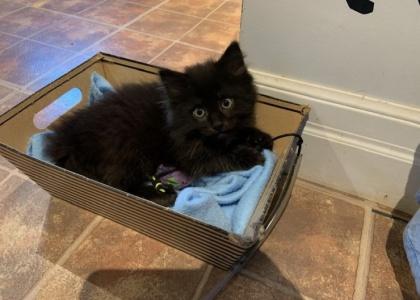 Willow-Kitten