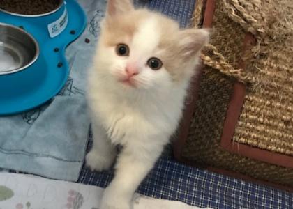 Pinky-Kitten