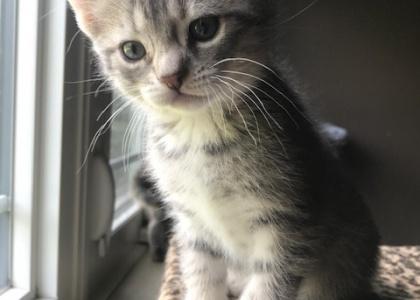 baby Ruth-Kitten
