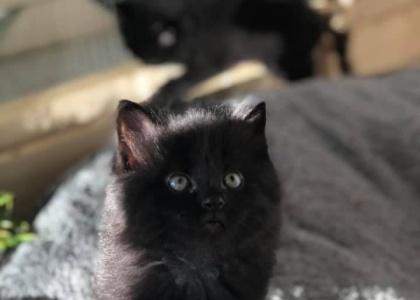 Jupiter-Kitten