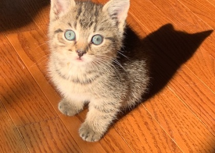 Grace-Kitten