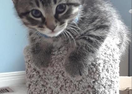 Noah-Kitten