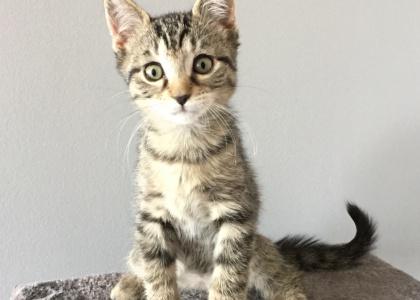 Mirage-Kitten