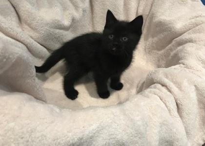 Stormy-Kitten