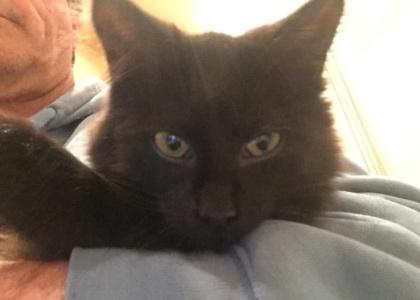 Amelia-Kitten
