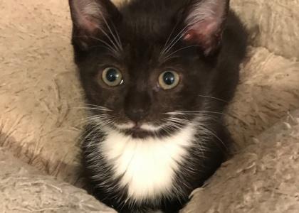 Starr-Kitten