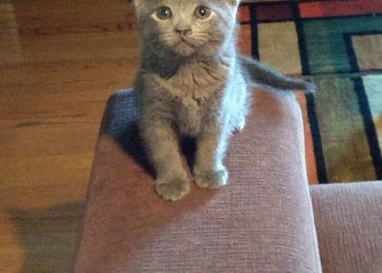 Tina- Kitten