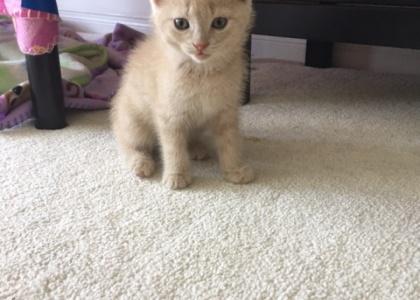 Angel-Kitten