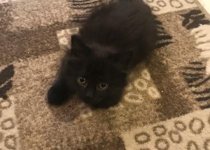 Kimmie-Kitten