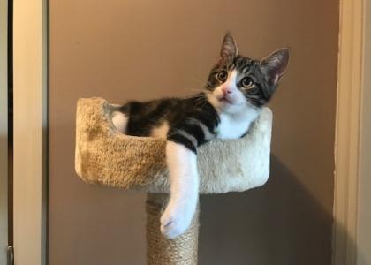 Pumbaa-Kitten