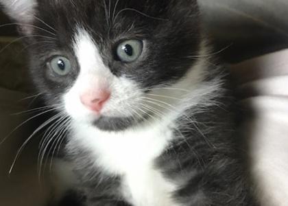 Twix-Kitten