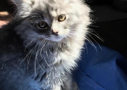 Flora-Kitten