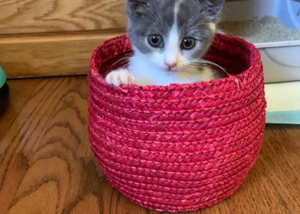 Alice- Kitten