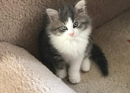 Avery-Kitten