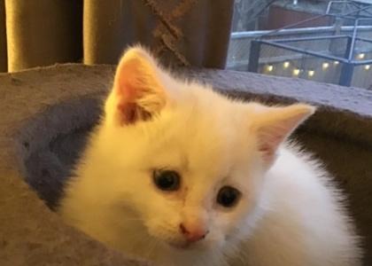 Casper-Kitten
