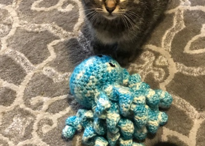 Alfalfa-Kitten