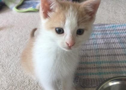 Buffy-Kitten