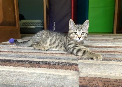 Dawson-Kitten