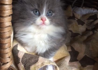 Levi-Kitten