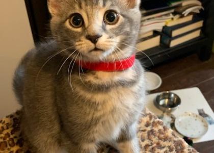 Leslie-Kitten