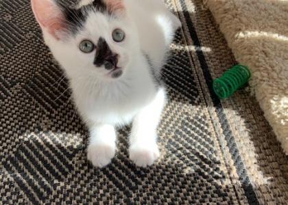 Sprout-Kitten